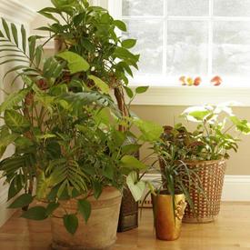 Reviving the office area with d cor and plants - Plantas de interior para salon ...